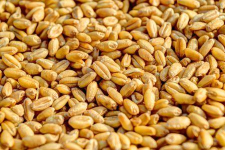wheat-381848_1280